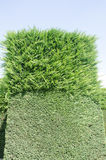 Part trimmed hedge Stock Images