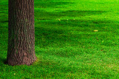 Part of the trunk of a tree and lawn Royalty Free Stock Images