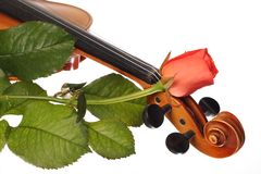 A part of violin with coral rose Royalty Free Stock Photos