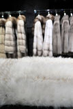 Part of white fur Royalty Free Stock Photography