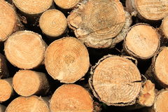 Part of wood Royalty Free Stock Image