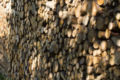 Part of wood Royalty Free Stock Photo