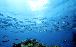 Parte 1 do oceano da matriz Imagens de Stock Royalty Free