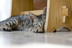 Parte adorabile dei gatti Fotografie Stock
