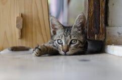 Parte adorabile dei gatti Immagine Stock Libera da Diritti
