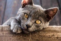 Parte adorabile dei gatti Fotografie Stock Libere da Diritti