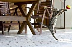 Parte adorabile dei gatti Fotografia Stock Libera da Diritti
