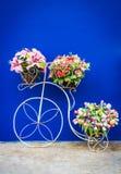Parte anteriore dei fiori e della bicicletta del bagno, filtro d'annata Fotografia Stock Libera da Diritti