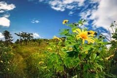 Parte anteriore dei fiori selvaggi di un'alta montagna Fotografie Stock Libere da Diritti