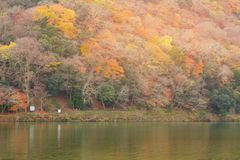 Parte anteriore multipla del fiume dell'albero di colore di alta della collina stagione di autunno, Giappone Fotografia Stock Libera da Diritti