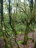 Parte consumata bagnata nebbiosa Jorge di bosque della foresta in peperoncino rosso Immagine Stock
