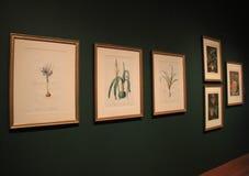 Parte da coleção de arte floral quadro extensiva, Cleveland Art Museum, Ohio, 2016 Foto de Stock Royalty Free