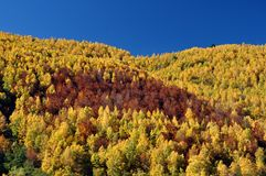 Parte da floresta bonita do outono foto de stock royalty free