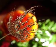 Parte da semente do dente-de-leão com gotas da água em um fundo colorido imagem de stock