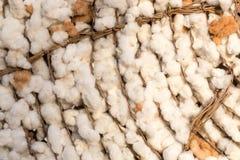 Parte de algodão, fundo Fotos de Stock Royalty Free