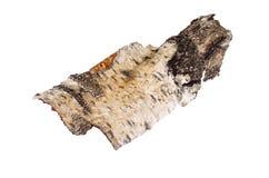 Parte de casca de vidoeiro isolada no fundo branco foto de stock royalty free