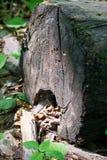 Parte de madeira do log nas máscaras da floresta de cores marrons e escuras Fotos de Stock Royalty Free