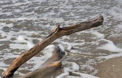 Parte de madeira lançada à costa em uma praia Imagem de Stock