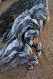 Parte de madeira lançada à costa na areia na praia fotografia de stock royalty free
