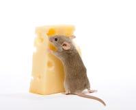 Parte de queijo fotos de stock royalty free