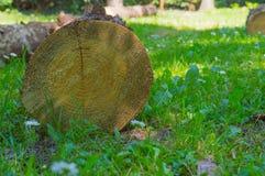 Parte de uma árvore do corte em um jardim Imagens de Stock