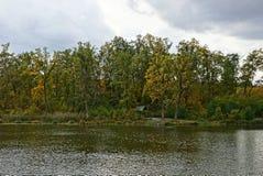 Parte de uma lagoa e de uma ilha com um mandril e umas árvores altas imagens de stock