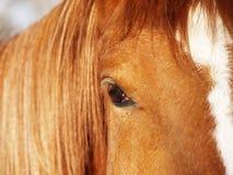 Parte de una cara del caballo (2) Imagen de archivo