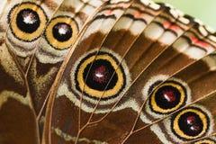 Parte del azul Morpho del ala de la mariposa Imagen de archivo libre de regalías