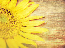 Parte del girasol Macro Naturaleza Fondo de madera Foco selectivo Imagen de archivo