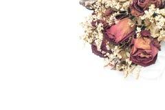 Parte del ramo seco de la flor en el fondo blanco, foco selectivo, espacio de la copia Imagenes de archivo