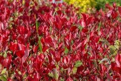 parte del Seme-cuscinetto di una pianta, colorata in genere brillantemente fotografie stock