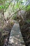 Parte del sentiero costiero della traccia del mastice, isola di Grand Cayman Immagine Stock
