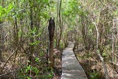Parte del sentiero costiero della traccia del mastice, isola di Grand Cayman fotografia stock libera da diritti