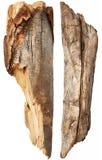 Parte del tronco de árbol Fotografía de archivo libre de regalías