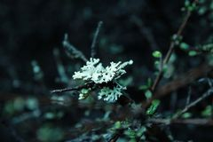 Parte dell'albero in foresta pluviale sull'isola del sud della Nuova Zelanda fotografia stock libera da diritti