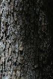 Parte della corteccia di albero nella piantagione della Nord Carolina fotografia stock libera da diritti