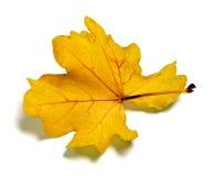 Parte della foglia dorata della quercia di autunno Fotografia Stock Libera da Diritti