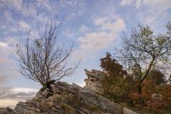 Parte della natura Fotografia Stock