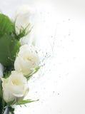 Parte della pagina con le rose bianche Fotografie Stock