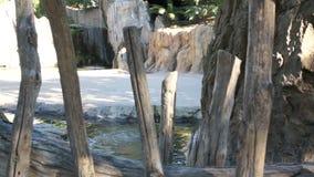 Parte della piscina naturale con acqua blu archivi video