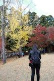 Parte della ragazza turistica in vestito e zaino neri, stante al parco di Kasugano-enchi sull'autunno con l'albero giallo e rosso fotografia stock libera da diritti