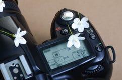 Parte della vista superiore della macchina fotografica e dei fiori bianchi minuscoli sulla cima Fotografie Stock Libere da Diritti