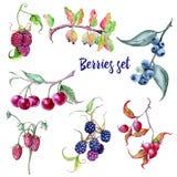 Parte di bacche Cinorrodi e ciliege delle uva spina dei lamponi delle fragole delle more dei mirtilli Immagini Stock