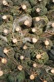 Parte di sotto degli alberi di Natale avvolti nelle reti di plastica fotografia stock
