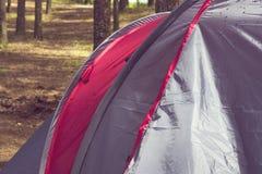 Parte di un primo piano della tenda in un'abetaia di estate Immagine Stock