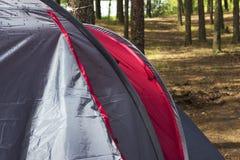 Parte di un primo piano della tenda in un'abetaia di estate Fotografia Stock