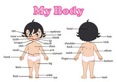 Parte di vocabolario del corpo Immagini Stock
