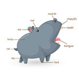 Parte di vocabolario dell'ippopotamo del corpo Fotografie Stock Libere da Diritti