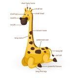 Parte di vocabolario della giraffa del corpo Immagine Stock