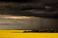 Parte dianteira de chuva que aproxima a colheita do canola de Saskatchewan imagens de stock